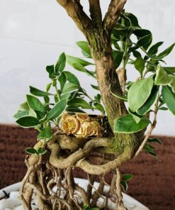 Nhẫn phong thủy tuổi Sửu – Nhẫn tuổi Trâu ngậm ngọc Zircon